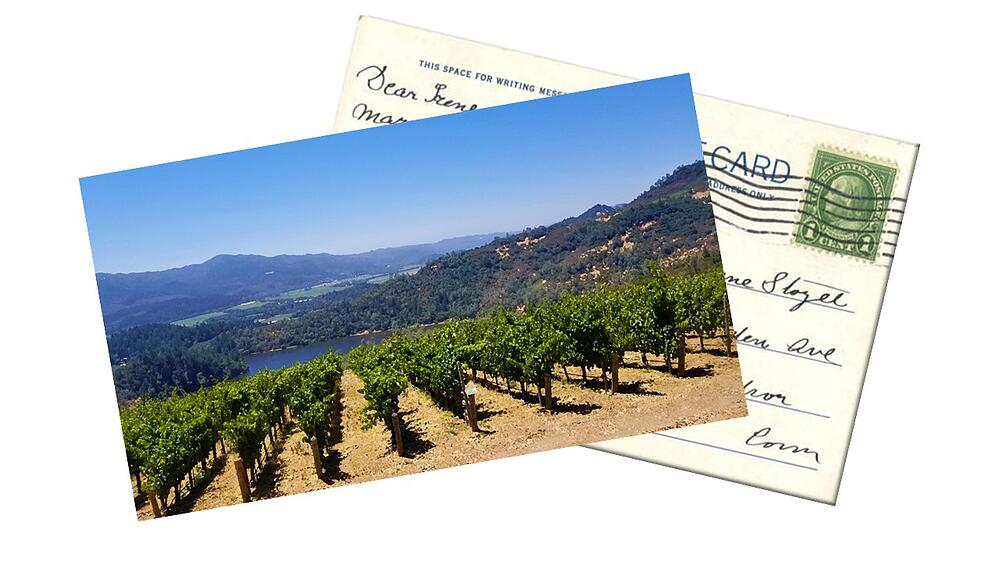 Vineyard Postcard